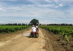 Orange to Vaison - quad bikes pass us in the vineyards