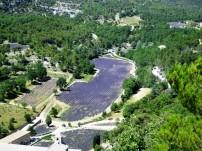 Gorde - Abbaye de Senanque -loads of lavender