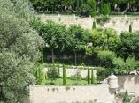 Gordes - poplars in the Italian Garden
