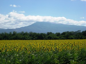 Vaison to Isle sur la Sorgue -Mt Ventoux and sunflowers