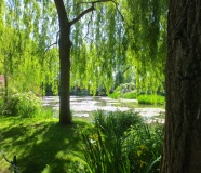 Willows at Giverny