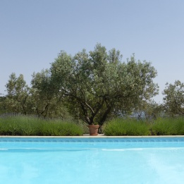 Olive trees, lavender, water - serenity!