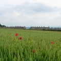 Blockley chimney tops from a wheat field dotted with poppies