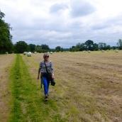 Walking through a mown field