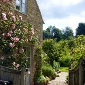 Pink flowers in Blockley