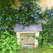 Blue flowers in Blockley