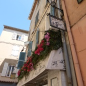 Floral colour in St Tropez