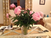 Our lovely market peonies