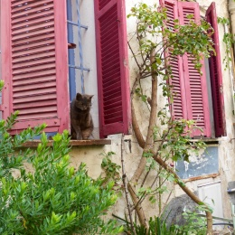 Pussy cat in Antibes
