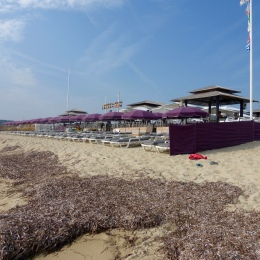 purple beach club