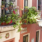 Pretty window boxes in the land