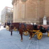 Horses waiting patiently outside the cathedral - poor horse - far too hot!
