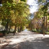 Dappled light in the park