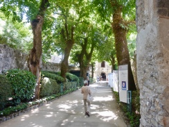The shady lane leading to the Villa