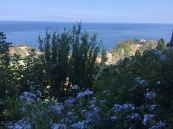Plumbago likes Sicily