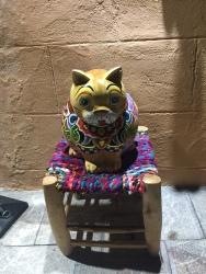 Hi pussy cat